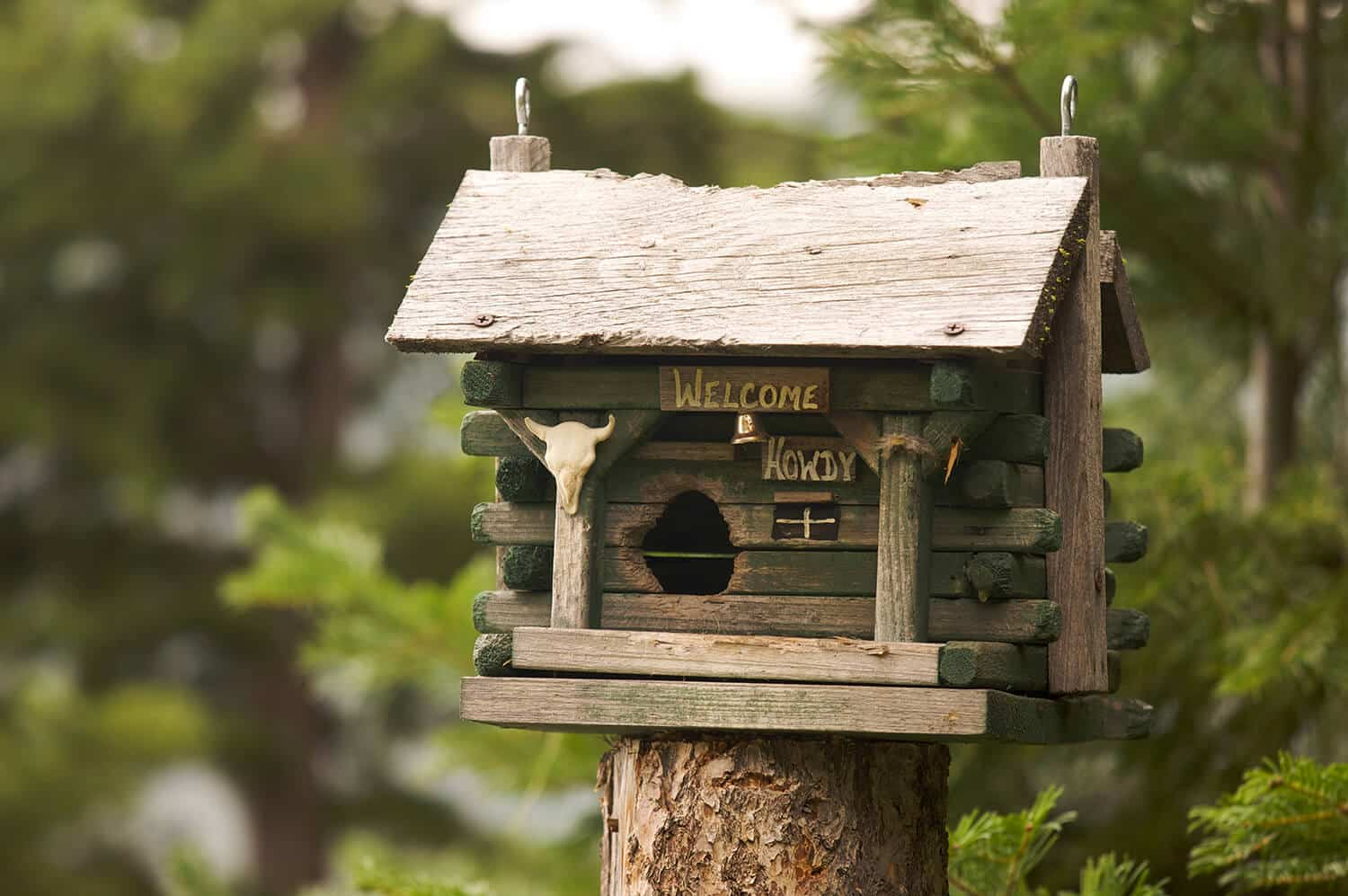 Building and selling wooden bird houses online
