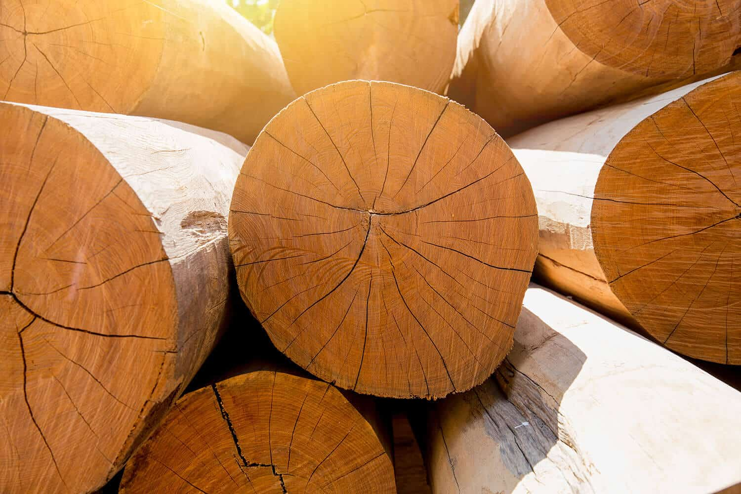 How To Dry Wood For Woodworking Step By Step